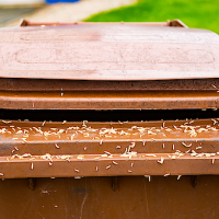 how to kill maggots in trash can